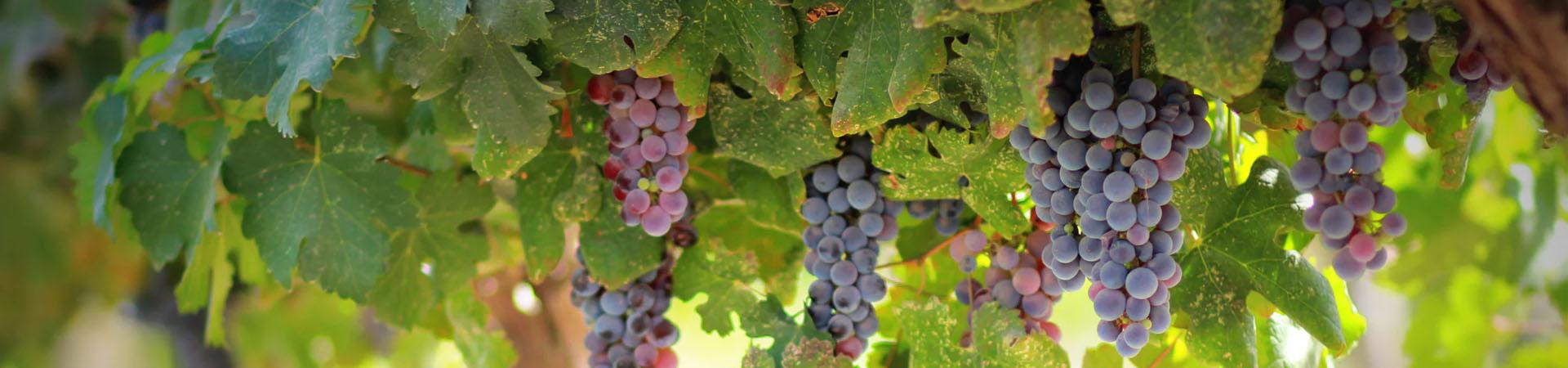 מקרר יין LIEBHERR דגם WTES5872